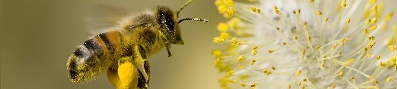 Vse za vaše zdravje, darovi čebel in narave v naši spletni trgovini